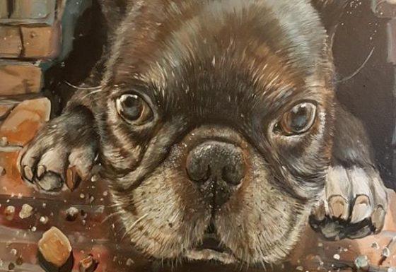 Joeri de Franse bulldog